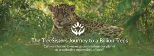 TreeSisters, Breathing Art Mandalan yhteistyötaho